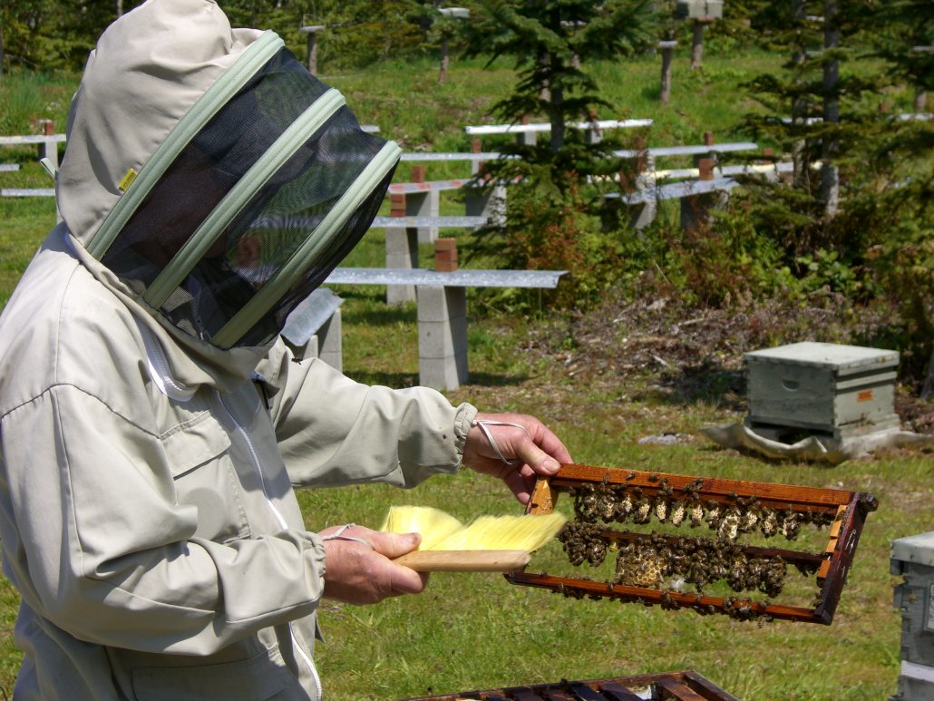 Olympic Wilderness Apiary – Wild Survivor Queens - photo#50